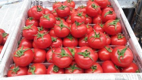 Rusiya Azərbaycan pomidorunu geri qaytardı