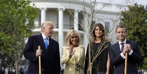 Fransa prezidenti Trampa yeni ağaclar göndərəcək