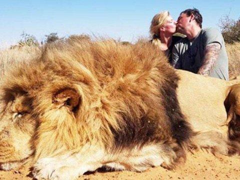 Ölü aslanın yanında öpüşən cütlük  ictimai qınaqla üzləşib