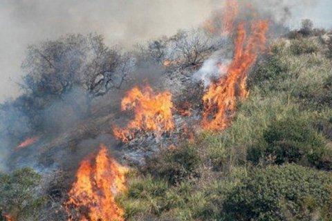 Oğuz rayonunda meşə yanır