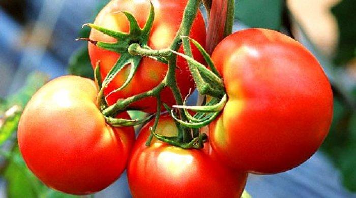 Rusiya ölkəyə pomidor və xiyar idxalını qadağan edəcək